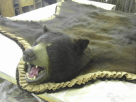 Mr. Fish Taxidermy Black Bear Rug